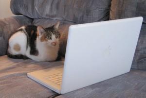 My kitty, Gwynn, checking my work.